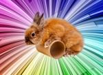 Кролик для праздника
