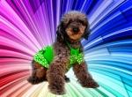 Собака для праздника